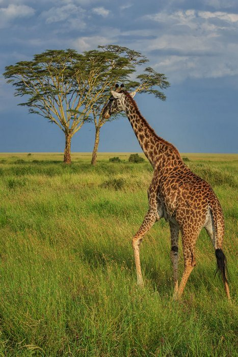 Intrepid Tanzania safari tour review