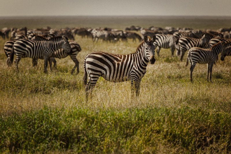 Tanzania safari review