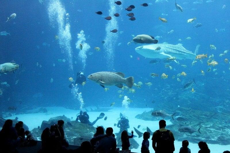 3 days in Atlanta Georgia Aquarium